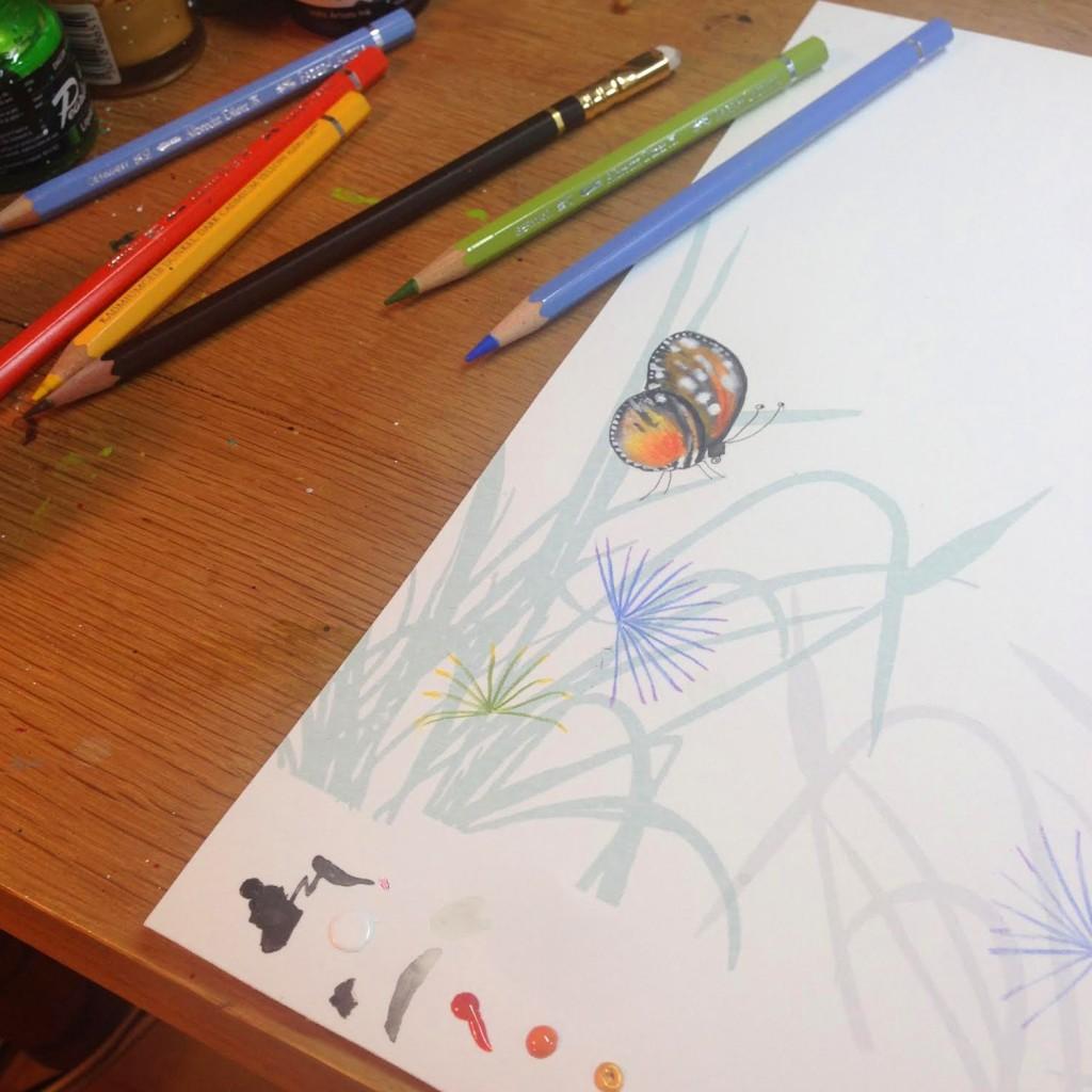 Butterfly illustration from wildlife artist Catherine Rayner