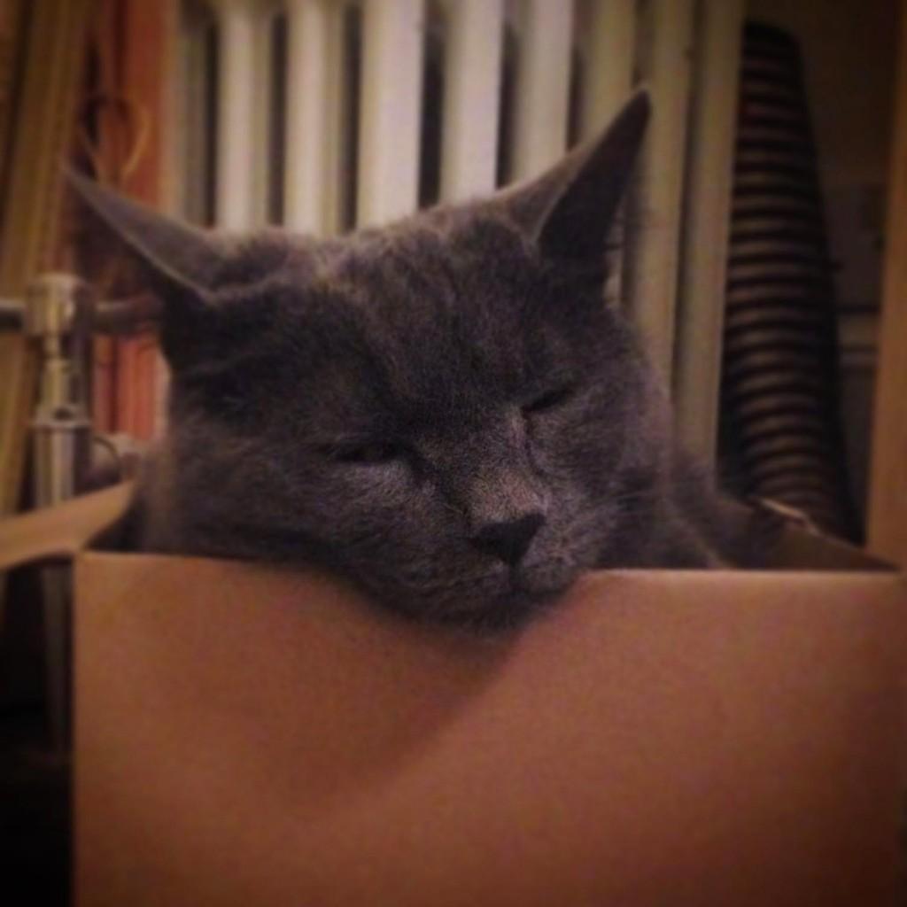 Catherine Rayner's grey cat